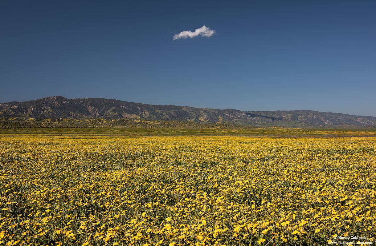 carrizo, plain, national, monument, cloud, flower, spring, mountain