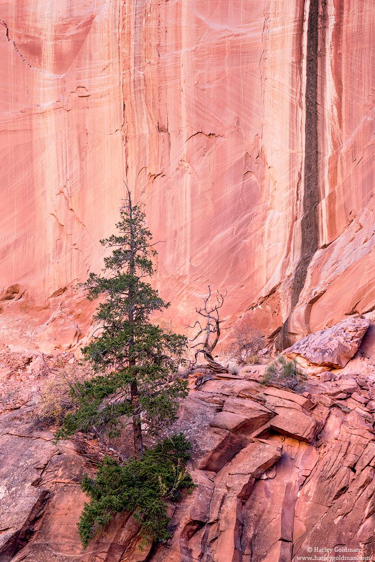 Utah, sandstone, tree, pine, rock, autumn, fall