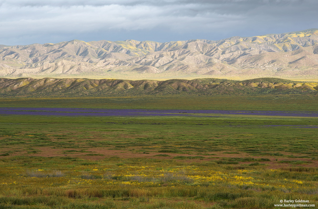 carrizo, plain, national, monument, purple, flowers, spring, photo