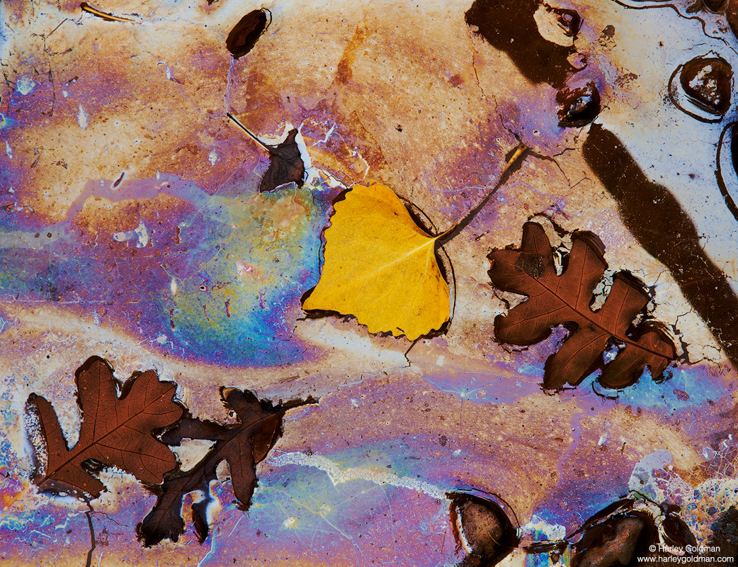 leaf, rainbow, mineral, oil, sheen, wash, utah, photo