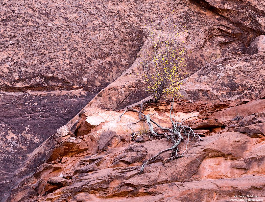 Utah, rock, fall, autumn, canyon