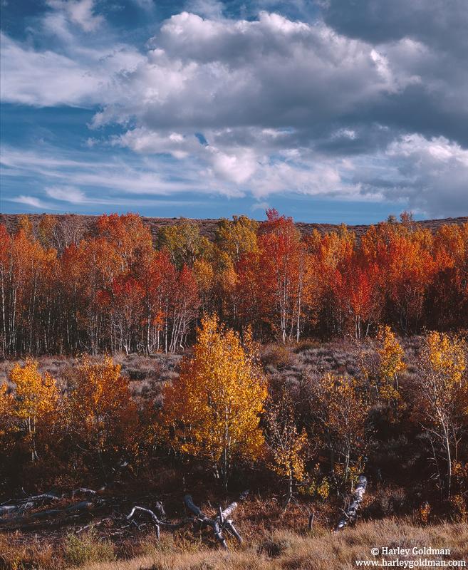 sierra,nevada, rust, gold, aspens, clouds, photo