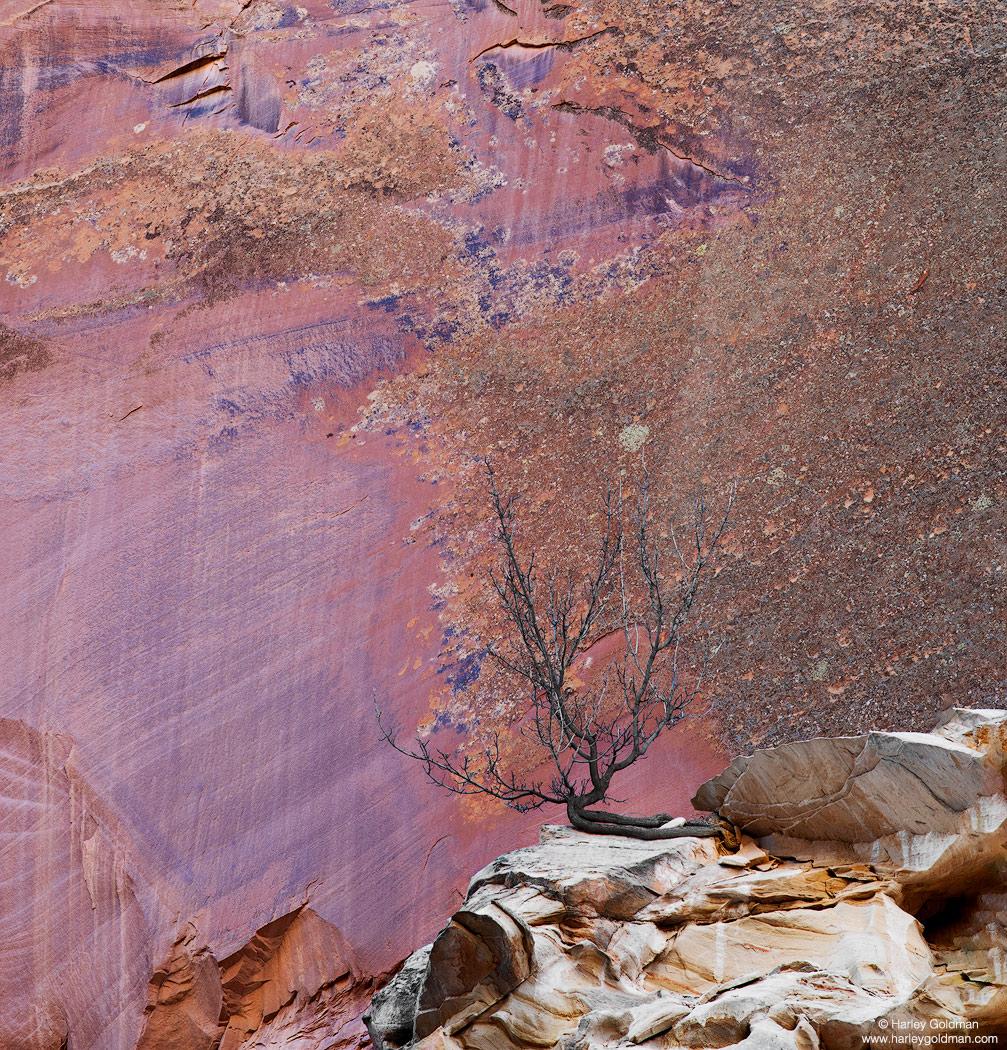 Utah, roots, sandstone, wall, boulder, rock, tree