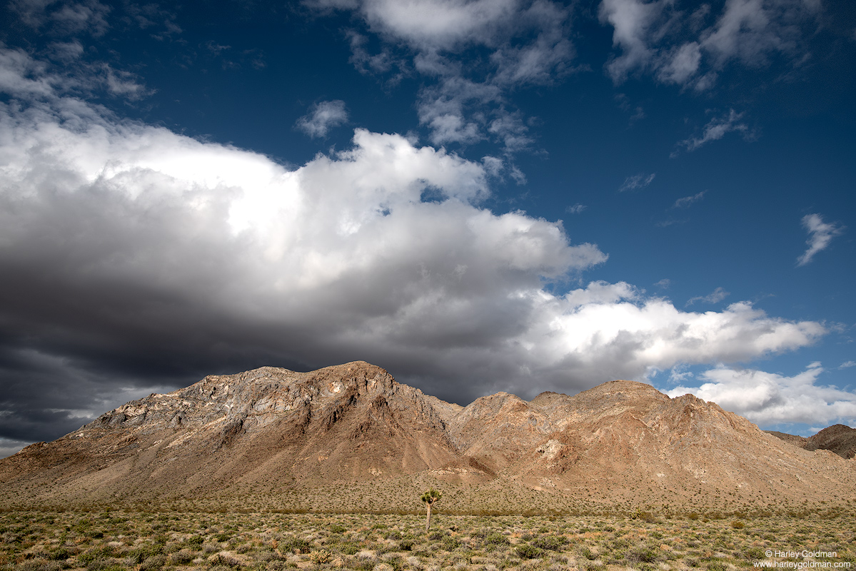 death, valley, solo, vigil, joshua, tree, cloud, clouds, mountain, hill, desert, afternoon