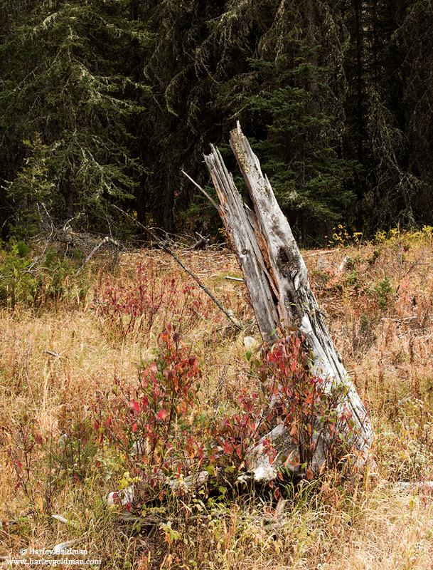 Montana, , photo