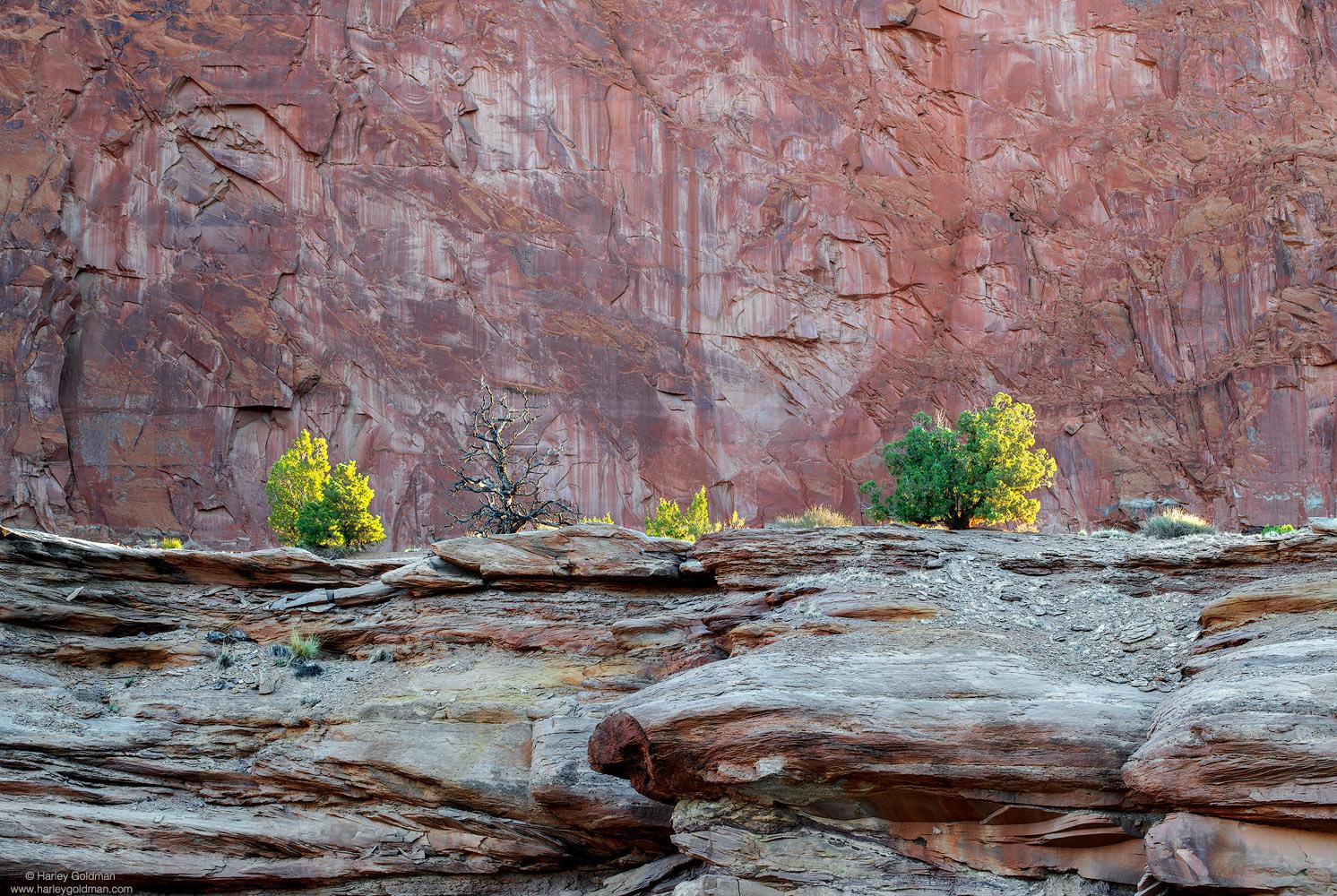 sandstone, rock, ridge, wall, juniper, sunrise, utah