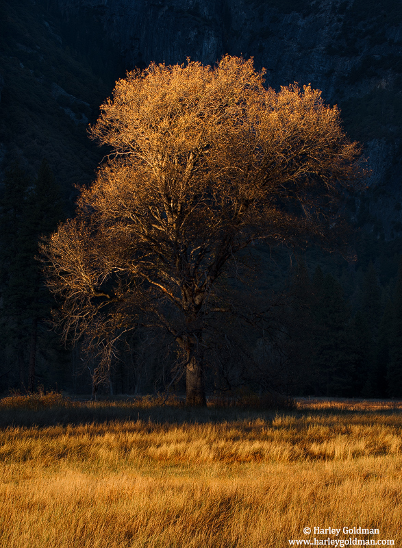yosemite, park, oak, photo