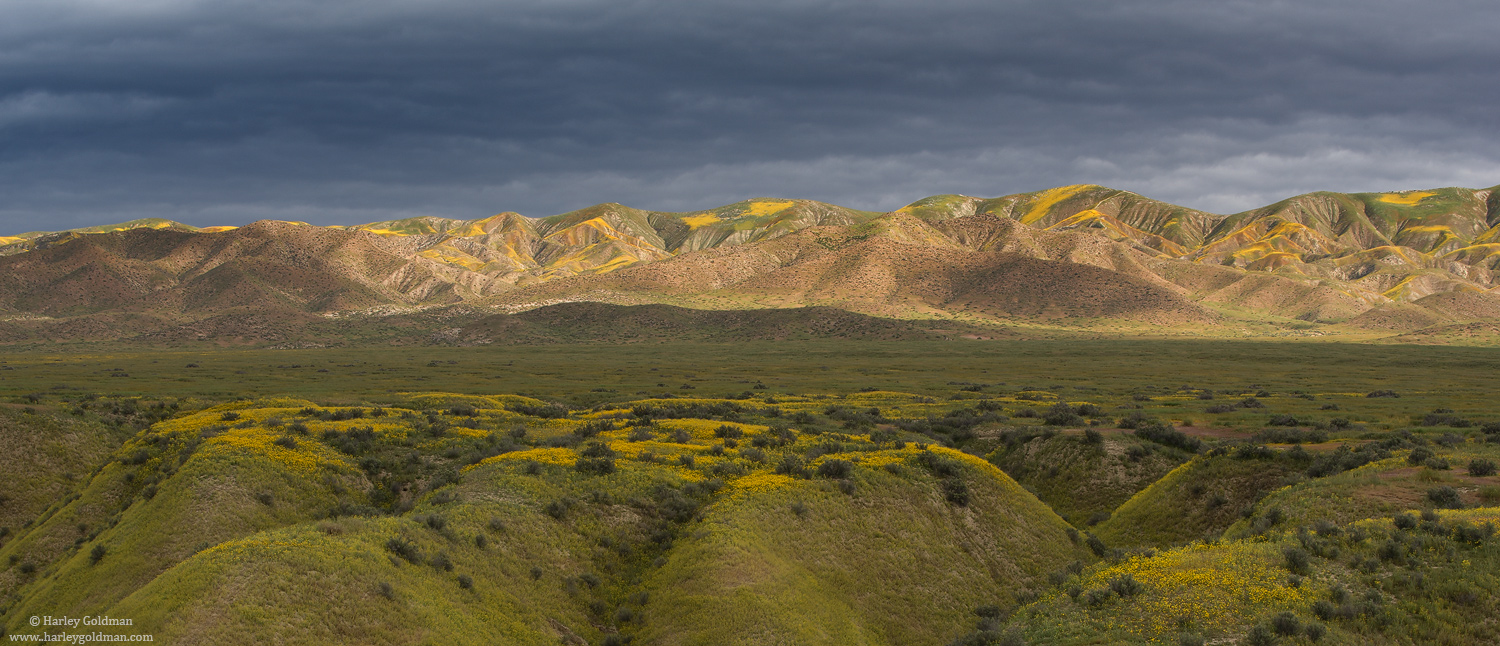 carrizo, plain, national, monument, flowers, yellow, photo