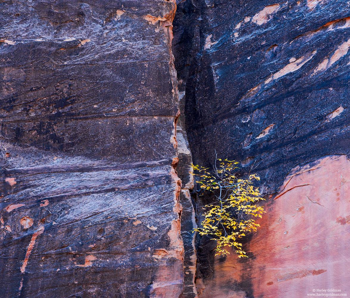 Utah, fall, autumn, sandstone, rock