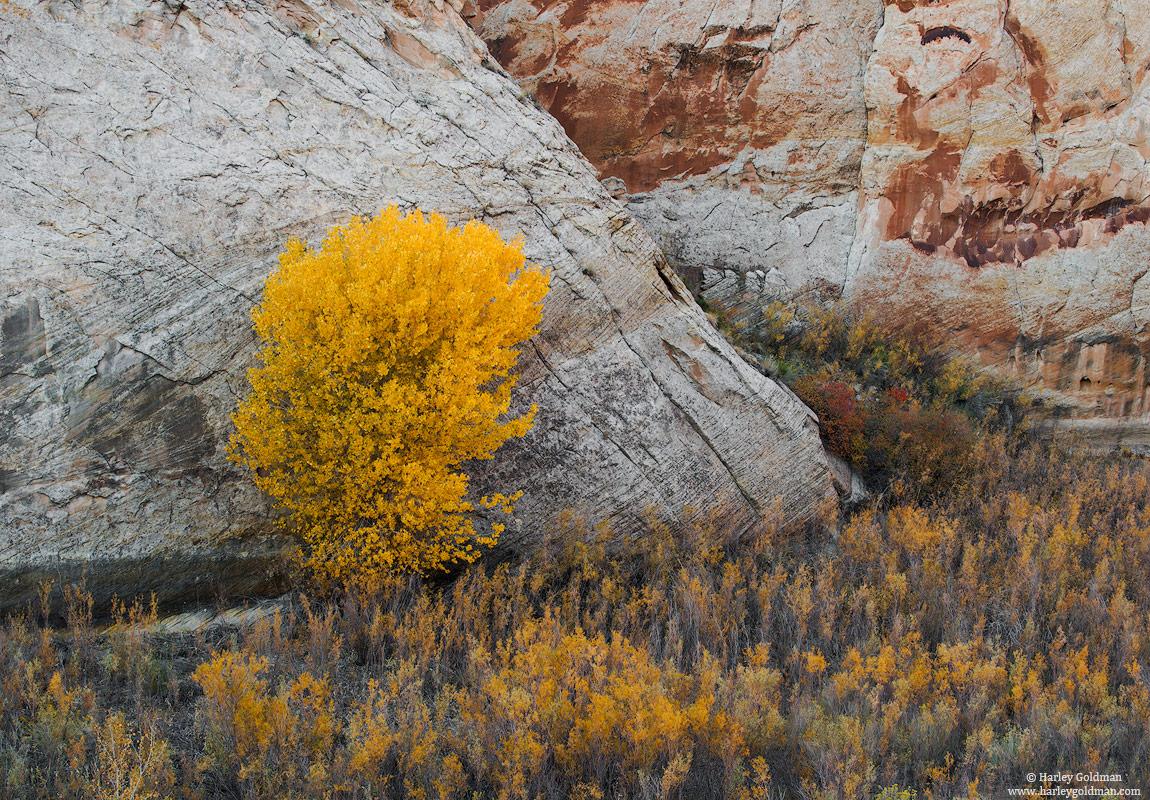 Utah, wall, fall, autumn, yellow, rock, canyon
