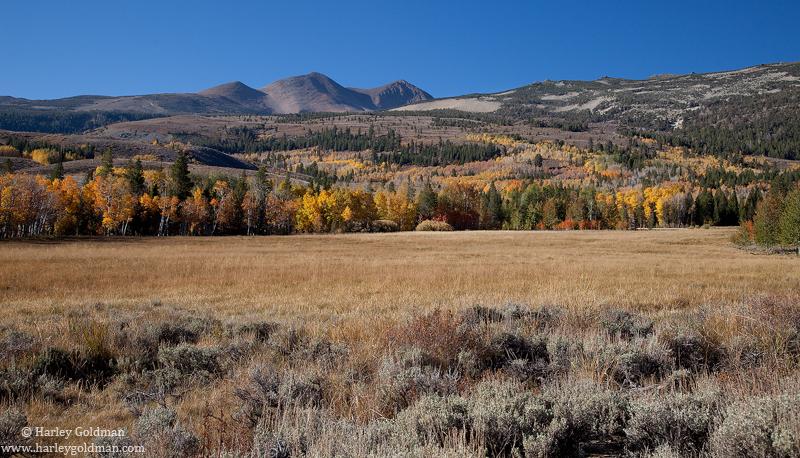 meadow, sierra, nevada, mountain, fall, autumn, aspen, photo