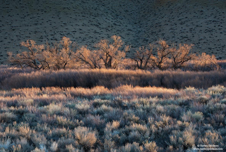 sage, dawn, first light, owens valley, photo