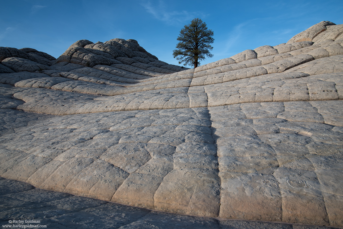 tree, rock, arizona, photo