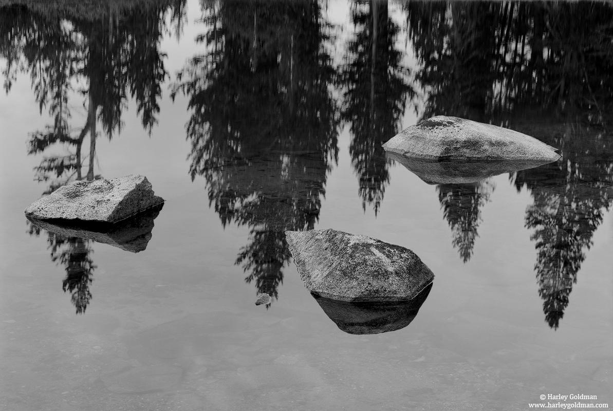 tree, reflections, yosemite, national, park, tioga, photo