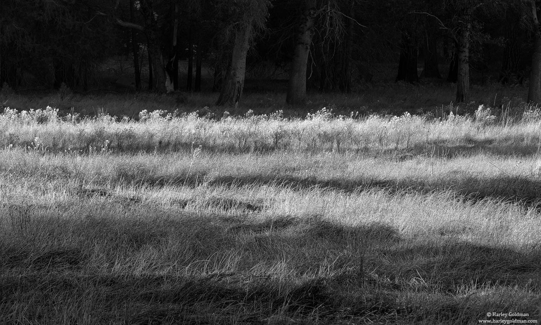 yosemite, national, park, tree, shadow, photo