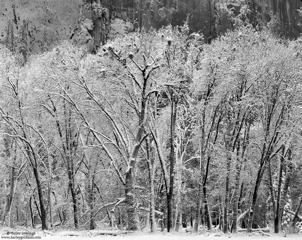 yosemite, national, park, trunks, photo