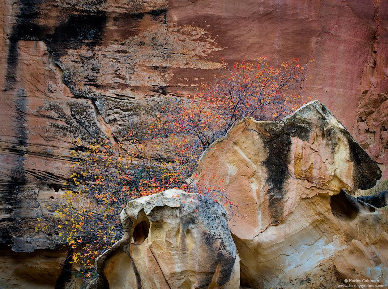 Utah, rock, color, fall, autumn, sandstone