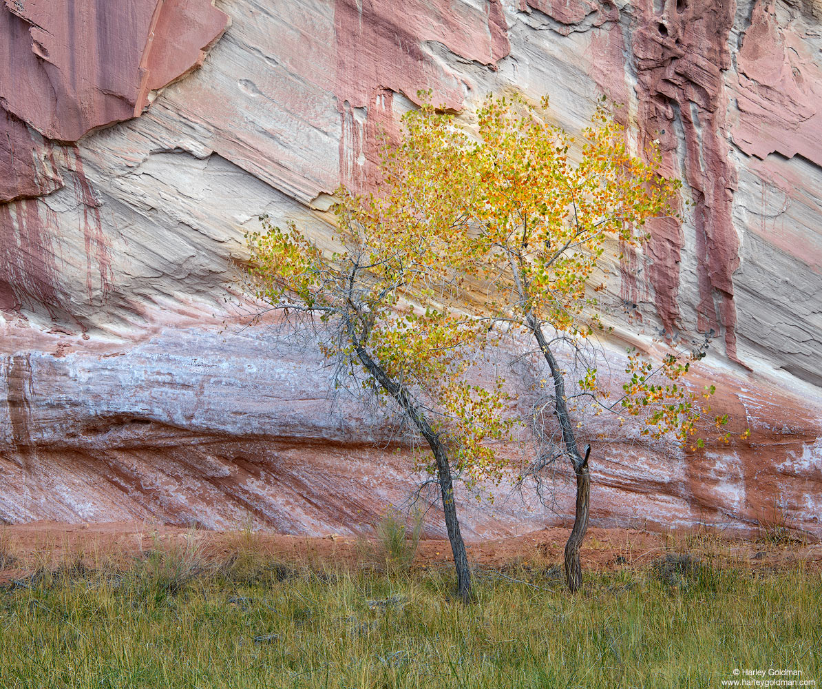 Utah, tree, wall, sandstone, fall, autumn, color, grass, rock, leaf, leaves