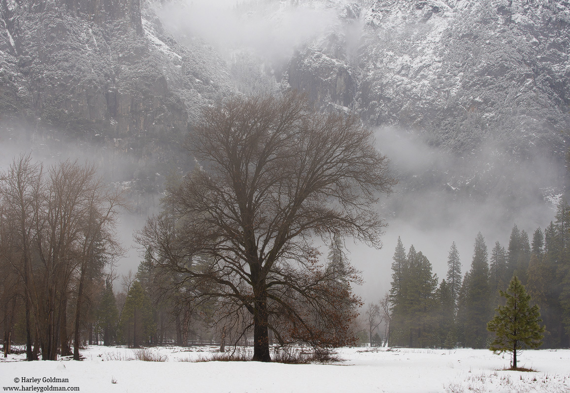 yosemite, valley, winter, bare, photo