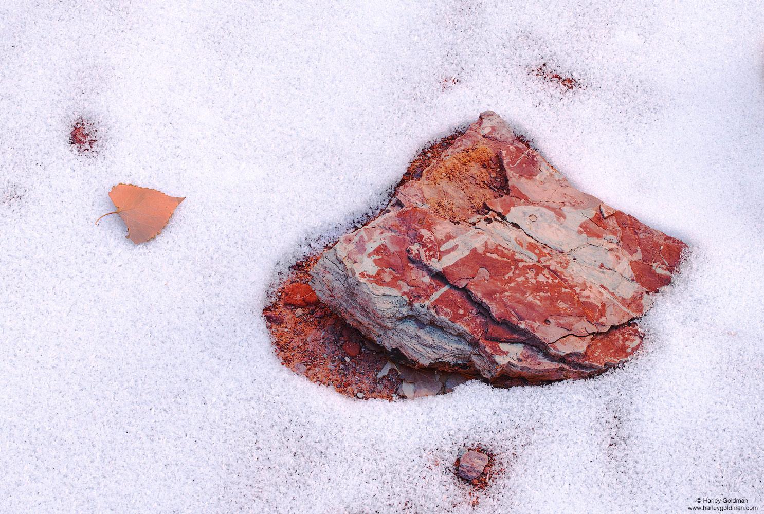 Utah, winter, rock, sandstone, leaf, snow