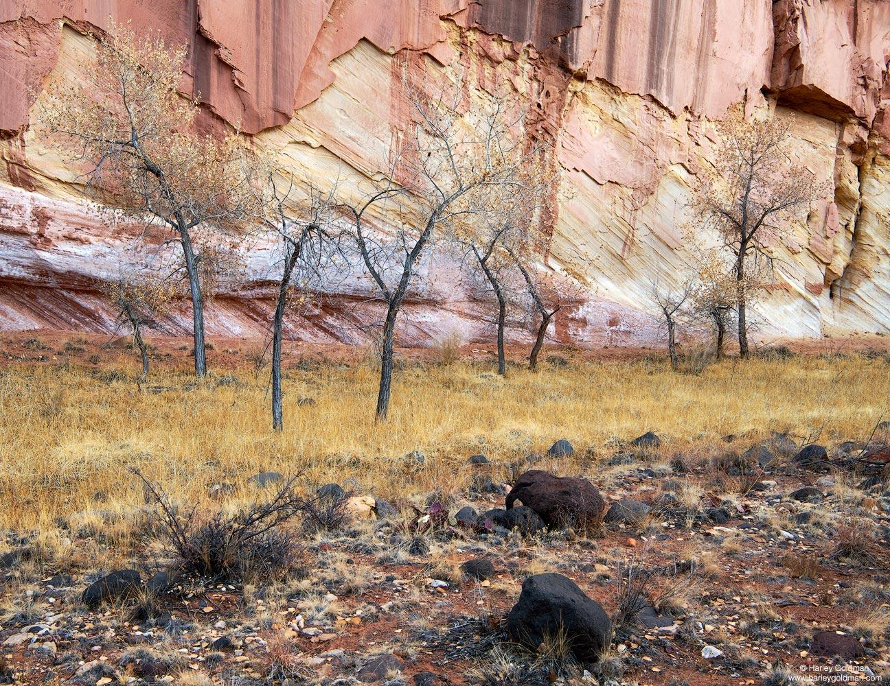 winter, trees, Utah, grass, wall, rock, sandstone