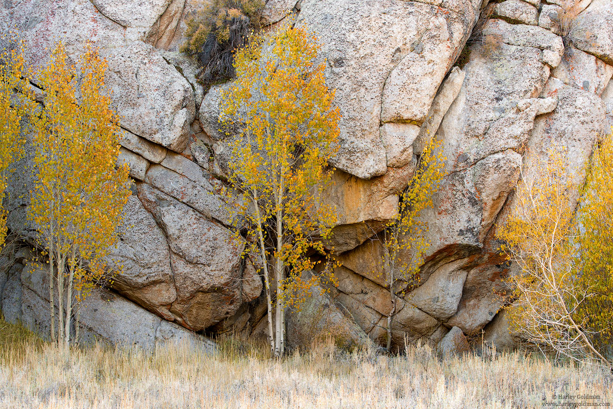 Aspen, central, california, fall, autumn