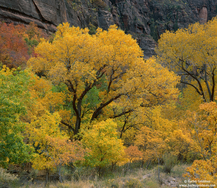 fall, color, zion, national, park, canyon